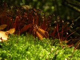 Wondering with tiny mosses
